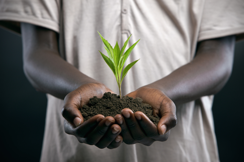 african holding soil with plant growth full size image