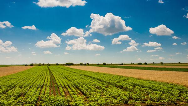 31d-ukrainian-farmland